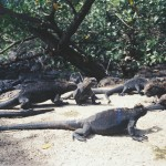 Small dinosaurs in the Galapagos